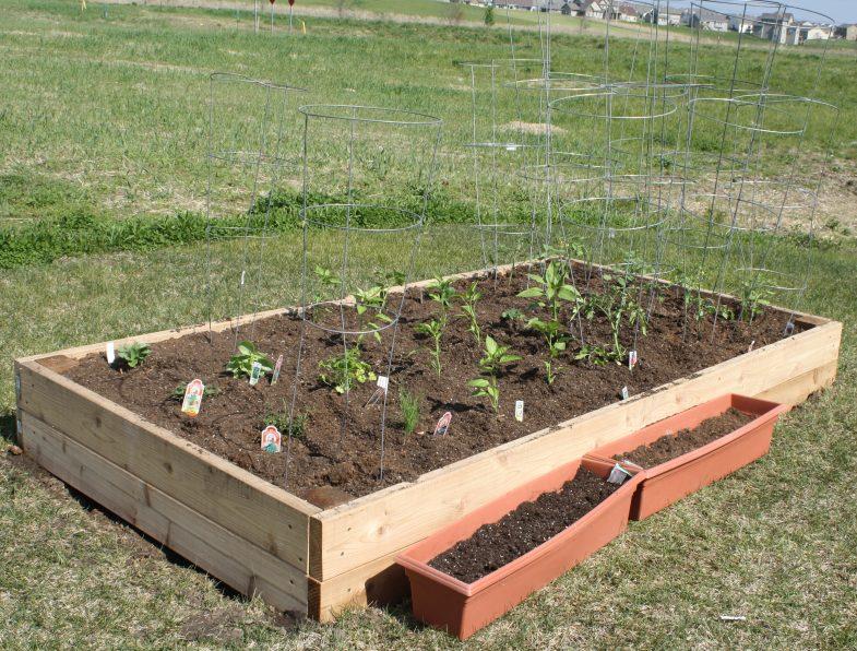 backyard-garden