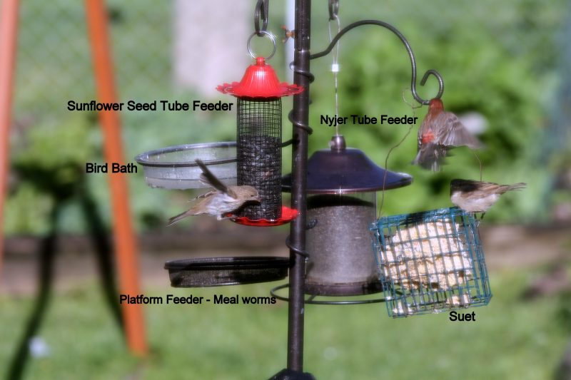 bird feeder group
