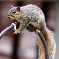 squirrel-on-birdfeeder