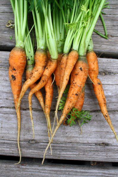 danver-carrots