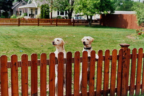 fenced-in-pets