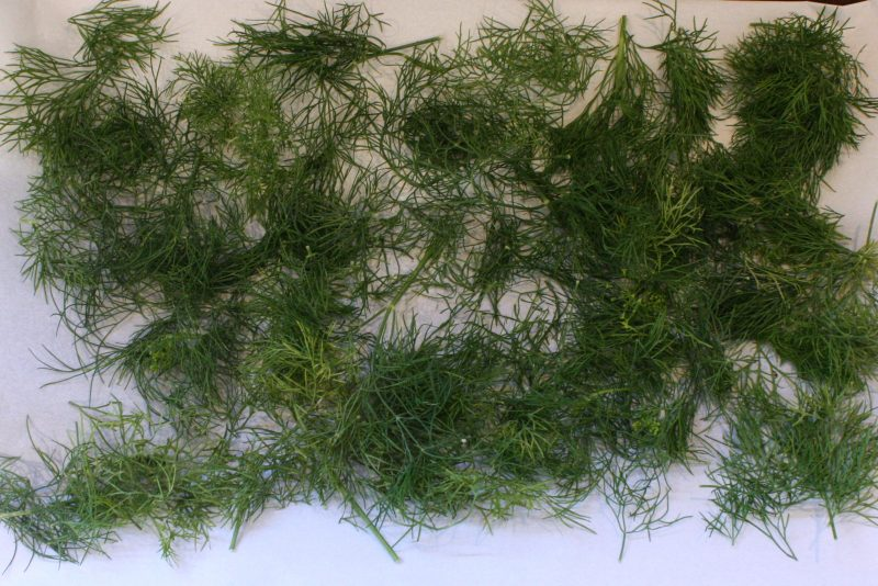 oven-dried-dill