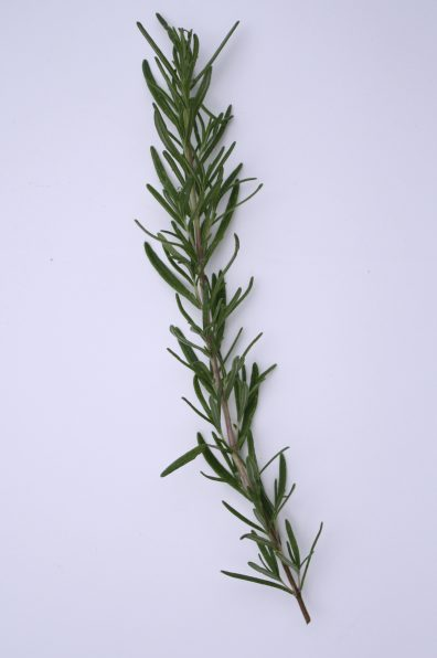 rosemary-to-freeze