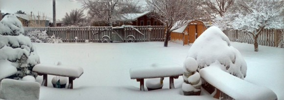 snowy-backyard