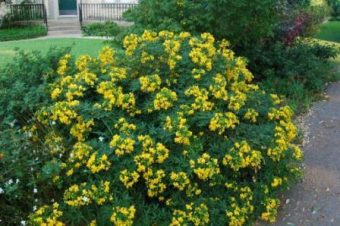 A Guide To Choosing And Caring For Flowering Shrubs