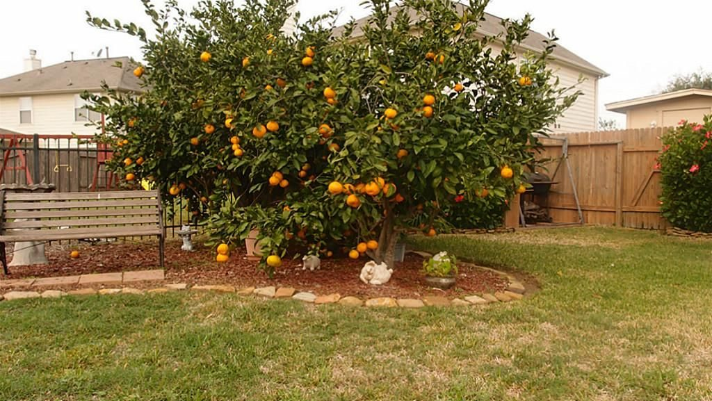 - Fruit For Thought: Your Essential Guide To Growing Fruit Trees