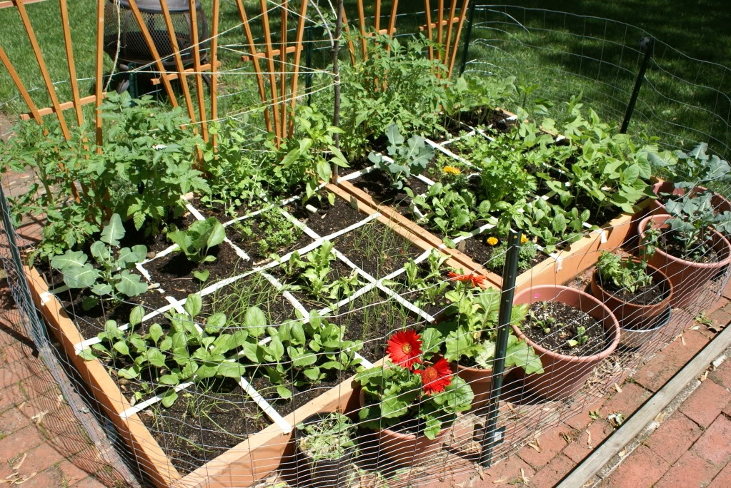 Vegetable Garden Idea Backyardville