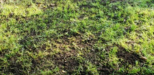 Gr Seed 101 Patching Bare Spots In Your Yard