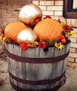 Pumpkins in whiskey barrel