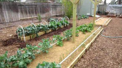 Mittleider Method of Gardening